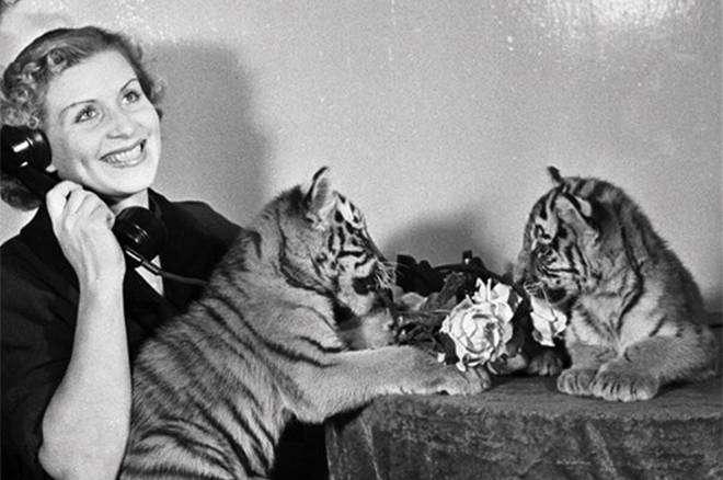 Маргарита Назарова — биография дрессировщицы тигров (Полосатый рейс)