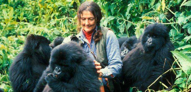 Дайан Фосси — знаменитый зоолог, защитница горилл